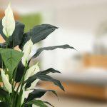 Je huis sfeervol maken met kunstplanten