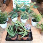 Verliefd! De Groene Kneusjesbox van Plantje.nl